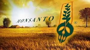 Monsanto contamination