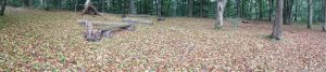 Forest floor drought leaves in August