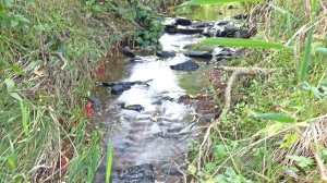 Our little stream